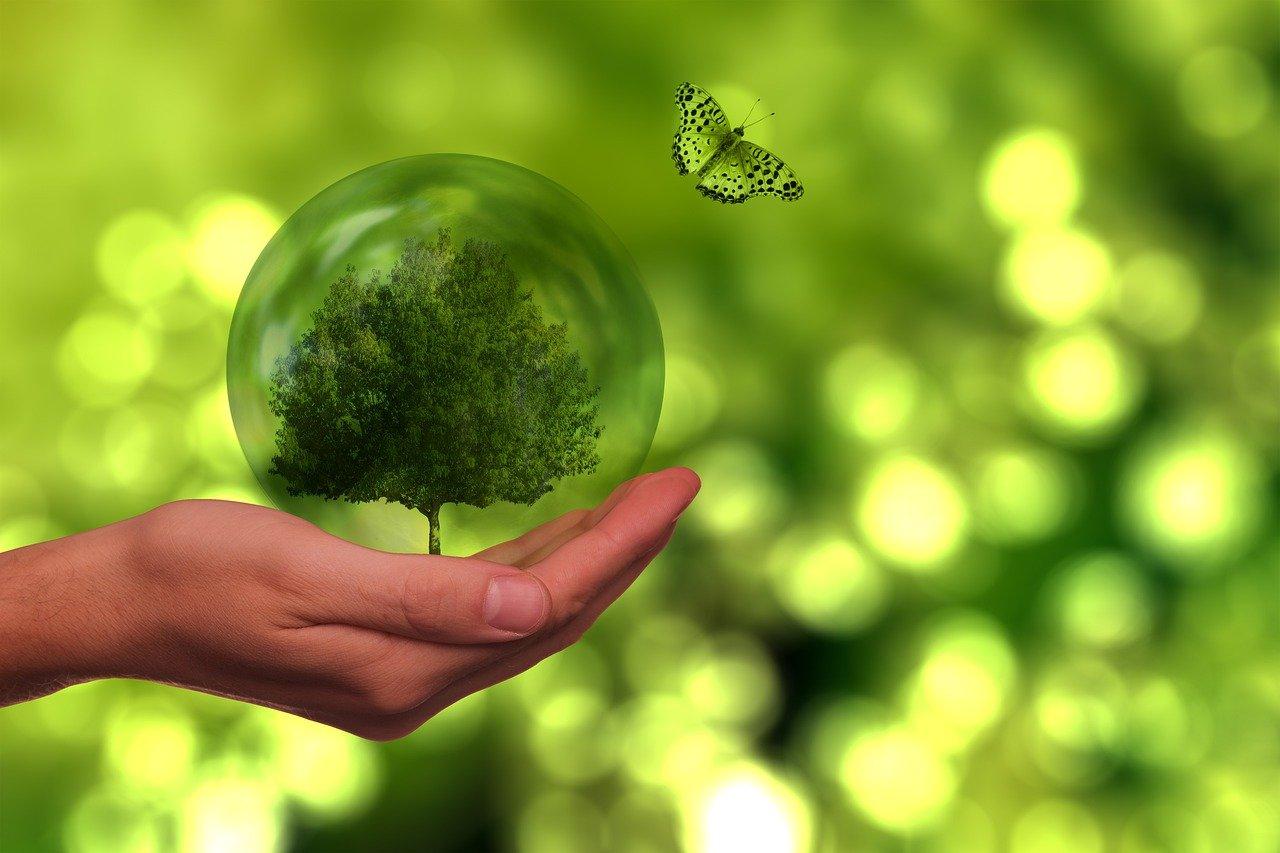 La Nueva Economía y su compromiso con la sostenibilidad